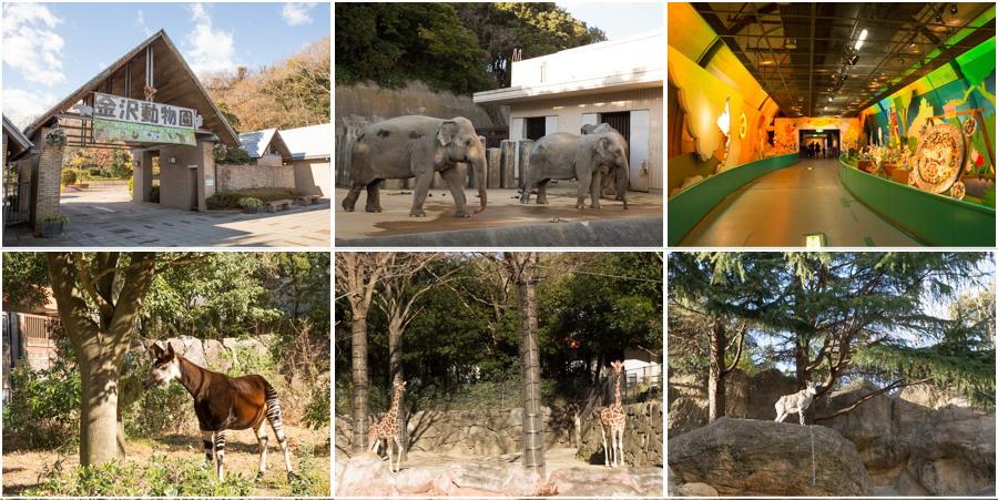 動物園 金沢